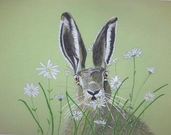 Daisy the Hare