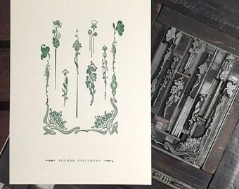 Flower Specimen letterpress print