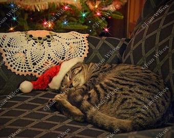 Sleeping Santa Daisy Kitty Cat Kitten Fine Art Photography Print Fine Art Photography Original Photo Print