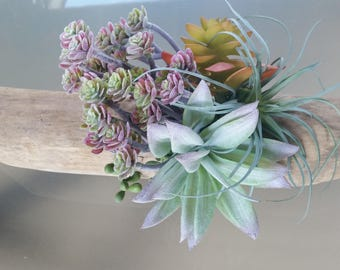 Driftwood Planter, Succulent planter, Natural Wood Platter, Air Plant Planter,
