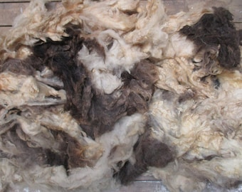 Jacobs Raw (Unwashed) Full Fleece  for Spinning and Crafts