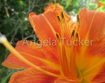 Orange Flower Thingy - Digital Download