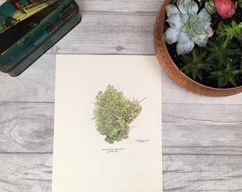 Vintage plant study turf prints for framing botanical print wildflower print nature artwork 1970s prints english countryside river bank uk