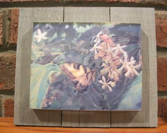 """Encaustic Photography """"A Butterfly"""""""