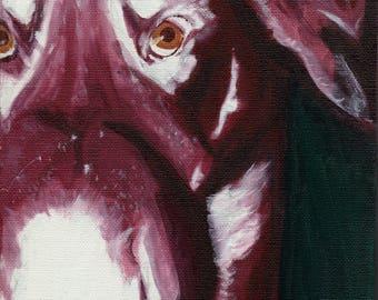 Rottweiler - Greeting Card