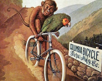 Vintage Bicycle Poster 1895 Columbia Bicycle Monkey and a Parrot Poster Size Book Plate