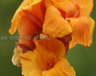 orange Gladiola photo card 5x7