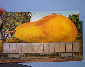 Vintage Postcard - Mamouth Pear - - 1910 fun - spoof travel postcard - very rare - Edward H Mitchell San Francisco original