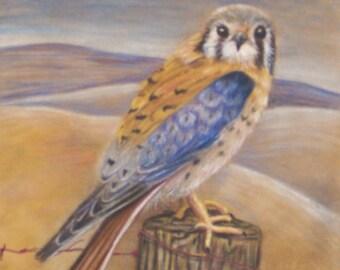 American Kestrel Hawk in prismacolor on suedeboard reproduction