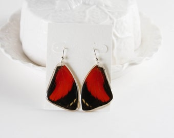 Real Butterfly earrings/ real preserved laminated resining Butterfly ear dangles/ 925 sterling silver/ Agrias pericles