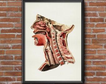 Old vintage Illustrations of Anatomy Anatomy-medical Prints-profile Language