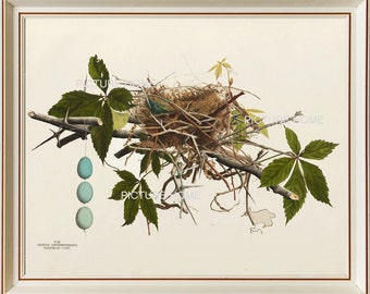 Bird Nest Eggs Print 1 Beautiful 8X10 Antique Art Room Decoration Wall Illustration to Frame Blue Eggs Forest Nature