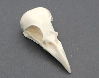 bone white plastic magpie skull