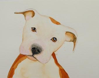 "Apollo: Pitbull Watercolor Painting 12""x9"" Giclee Print"