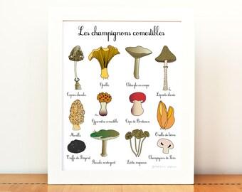 Kitchen Art French Edible Mushrooms 8x10 art print Fall Autumn Home Decor 12 Hand drawn illustrations Brown Orange Gourmet