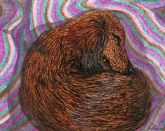 Dachshund dog pup snooze 8x10 art print from Susan Alison watercolor painting Weiner Doxie sausage dog asleep dreaming snoozing comfortable