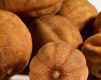 Lemon Omani White Whole