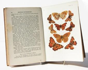 Butterflys and moths Antique 1910s British Natural History - Colour plates Vintage Hardback Childrens Antique Natural History