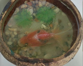 Resin art 3d fish on coconut
