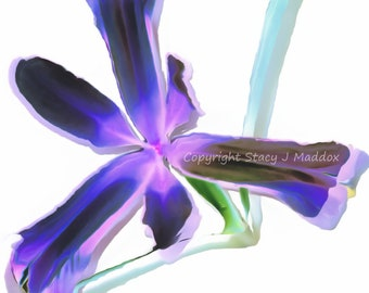 Iris Blue Garden Flower Sword-like Green Leaves PC Background, Plant Wallpaper, Macro Photo, Blank Greeting Card, Stock, Gift Idea, Crafts