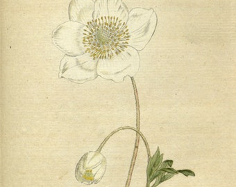 Flower painting, Botanic art, Botanical chart, Beautiful flowers, 54