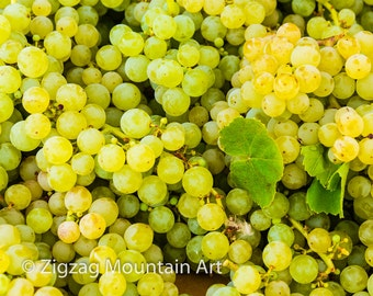Grape art for kitchen.  Fruit wall art or kitchen wall art from food photography.  Fine art print for kitchen decor or wall art.