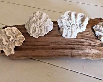 "4 Natural White Rose Coral, 3.75""-5"", Fossil Rose Coral, Nautical Decor, Beach Decor, Craft, Garden Accents"