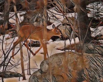 Deer Photography, Deer Wildlife Photo, Deer Print, Deer Picture, Deer Photo, Deer Gift, Deer Girl Nursey, Deer Wall Art, Deer Download,