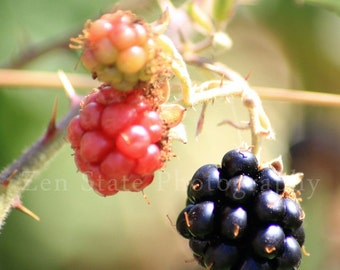 Blackberry Wall Art. Nature Photography Print. Macro Photography. Photo Print, Framed Photography, or Canvas Print. Home Decor.