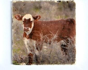Cow Stone Coasters - Masked Calf Farmhouse Decor - Baby Animal Nursery Decor - Red Cow Drink Coasters - Cow Photo Coasters - Farm Animals