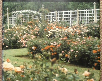 Vintage Gardening / Peter Malins' Rose Book 1979 Dodd Mead & Company