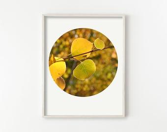 "digital download print, instant download printable art, nature photography, aspen leaves, leaf prints, botanical wall art - ""Color Harmony"""