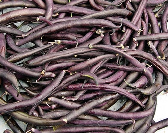 Royal Burgundy Bush Bean Seeds Non-GMO Naturally Grown Open Pollinated Heirloom Gardening
