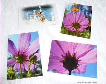 """Lot de 4 cartes postales 10x14cm avec des photos de fleurs de cosmos """"Evasion rose"""""""