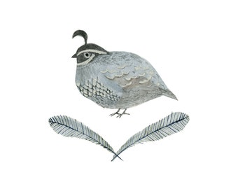 California Quail - archival art print