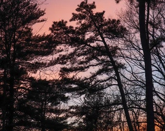 Three Colors of Sky in Vermont with Trees
