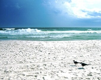 Two Seagulls, Coastal Bird Photo, Alabama Gulf Coast, Beach Photo, Ocean Photograph, Seagulls Photo, Blue White Turquoise, Ocean Beach Photo
