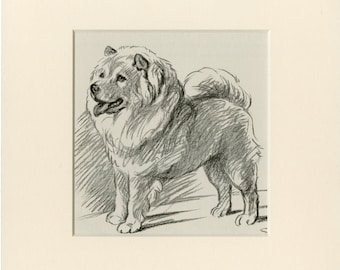 CHOW PRINT C. 1937 Vintage Dog Print by Lucy Dawson - Matted 8x10 - Wall Art, Home Decor, Gift Idea - Dog Art, Pet Gift, Ready to Frame