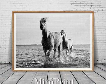 Nature Art Photography, Minimalist Black and White Photography, White Horses Print, White Horses Running, Modern Horse Art Print, Nature Art