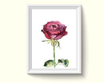 Rose Flower Watercolor Painting Poster Art Print P451