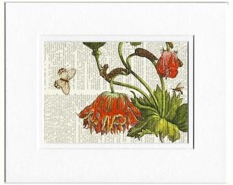 1600's botanical no.14 print