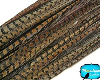 """Les plumes de queue de faisan, 50 pièces - 16-18"""" naturel moissonnées queue gros de plumes de faisan (en vrac): 3292"""