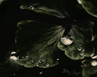 Dark low exposure raindrops on leaves print, abstract macro nature photography, romantic haunting photography print, home decor, gift idea