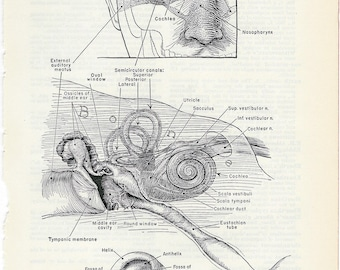 Human Anatomy The Ear Vintage Medical Anatomy Illustration to Frame or for Collage, Scrapbooking, Mixed Media, Paper Arts and MORE PSS 0530