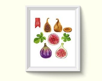 Fig Herbs Plants Watercolour Painting Drawing Art Print N216