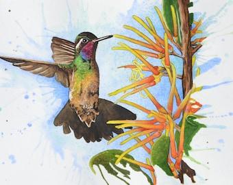 "Hummingbird 11"" x 17"" Watercolor Illustration"