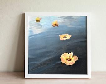 Tropical Hibiscus Joyously Floating - Photo Print Canvas Wood Acrylic Metal - 2891