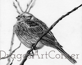 Bird - original art for sale