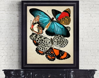 Botanical Print Wall Art Antique Print Butterflies Insects Giclee Vintage Home Decor Natural History Print Art Decorative Reproduction BF004