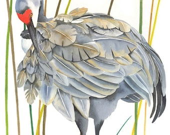 "Limited Edition GICLEE Print / ""Reed Preening"" / Sandhill Crane"